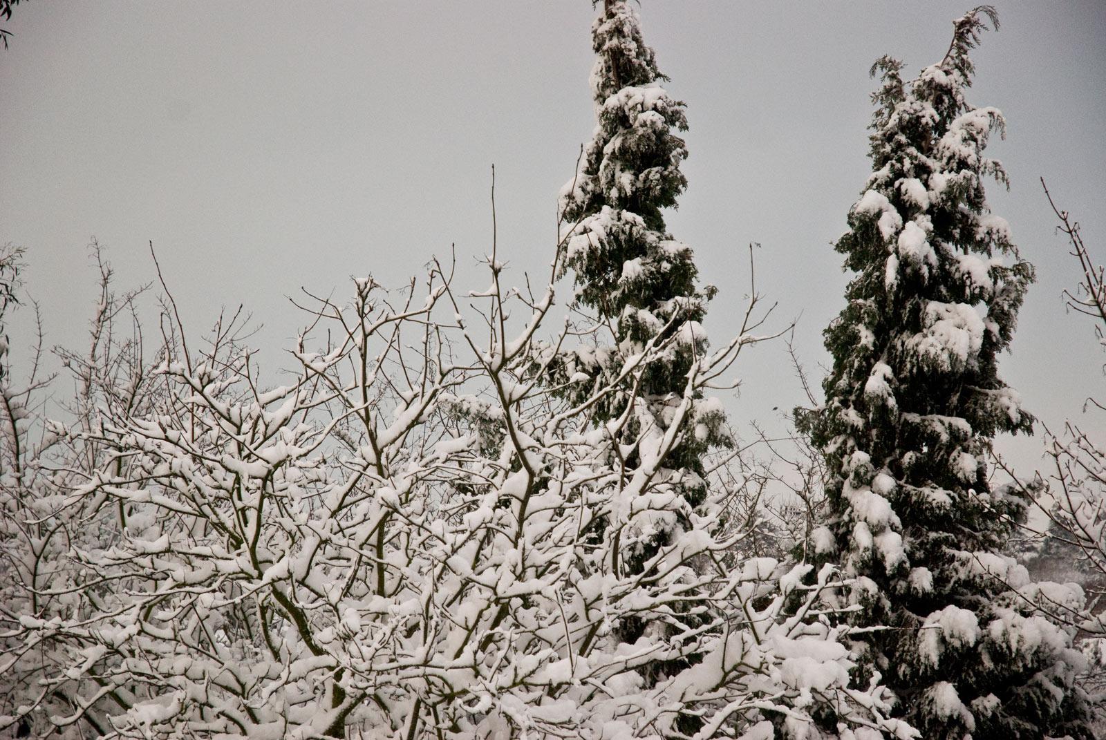 ICMSTUDIOS - Snow